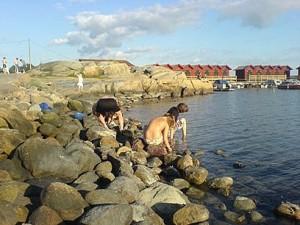 Krabbfiske på Getskär utanför Stenungsund